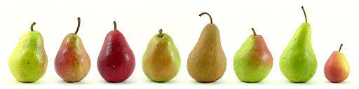 512px-eight_varieties_of_pears